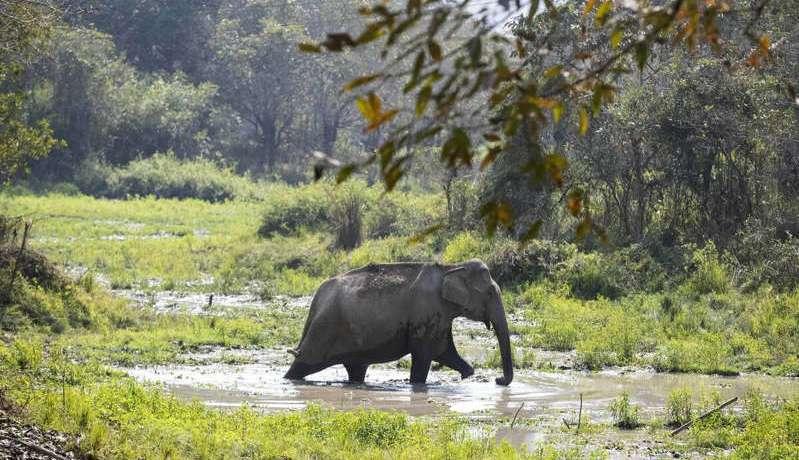 Inde : Rejeté par son troupeau, un éléphant tue 16 villageois en deux mois