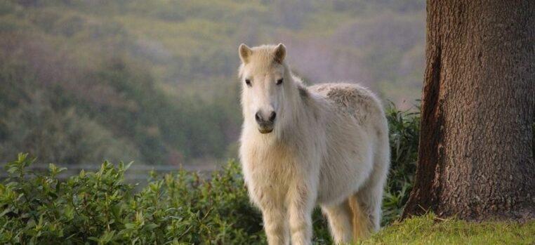 Un retraité tente de violer un poney, sa sanction surprend