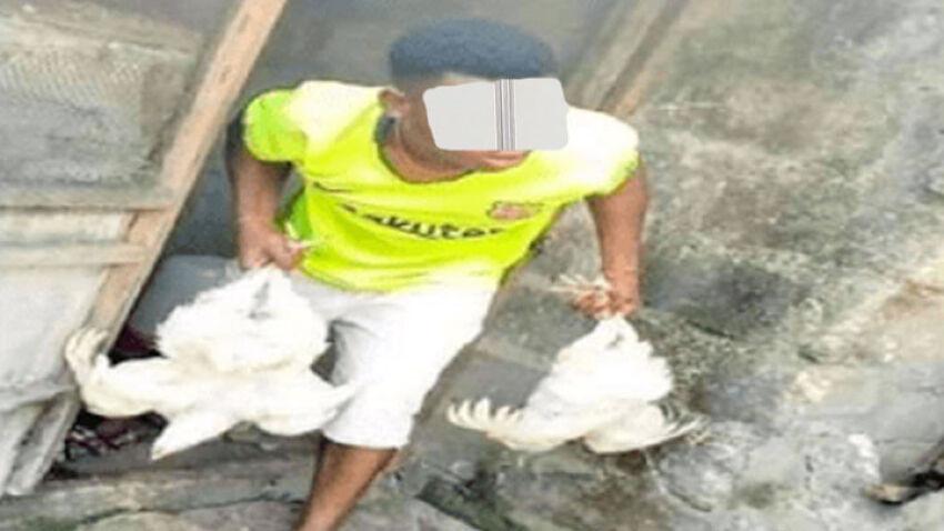 Côte d'Ivoire: Un jeune homme condamné à 24 mois de prison pour avoir volé 18 poulets plus un matelas